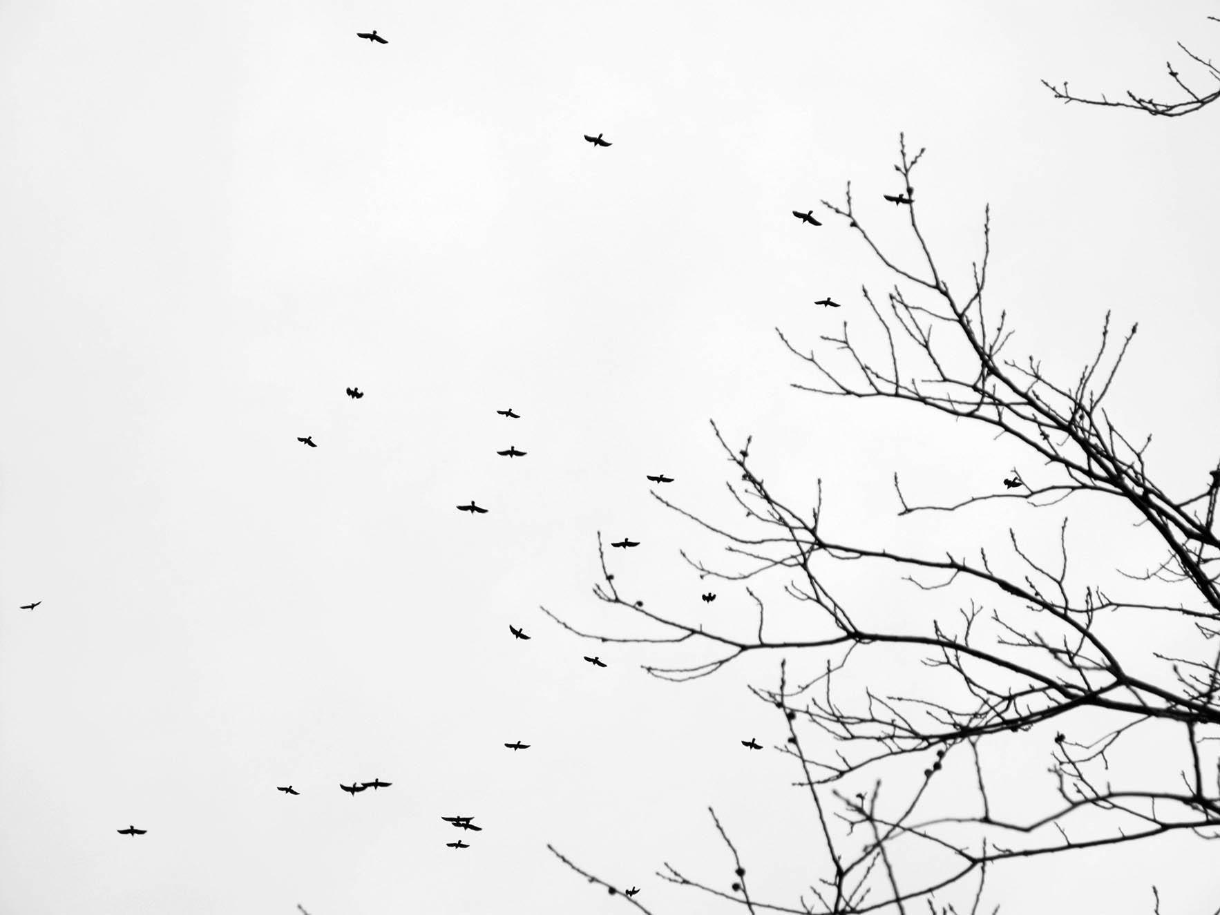 ©Andrea Nisticò